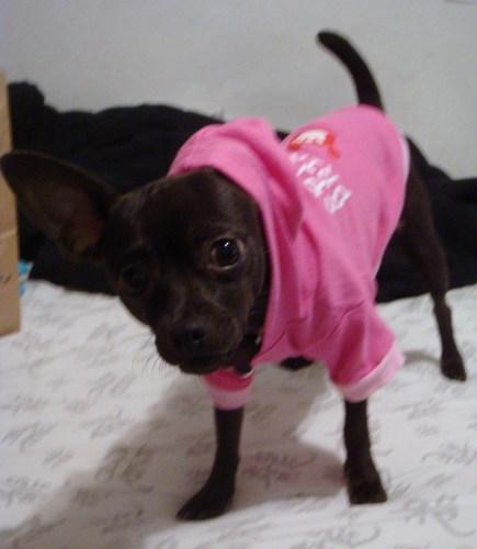 my sweet puppie allie!