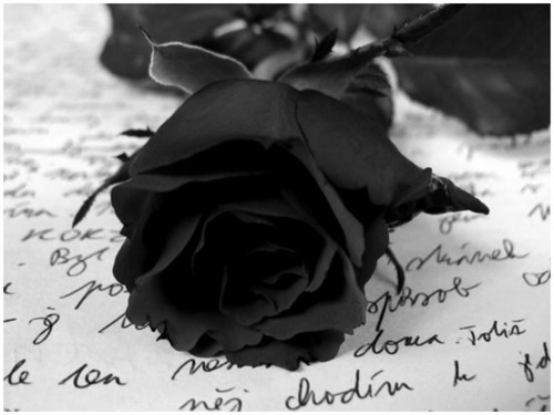 Black Rose !