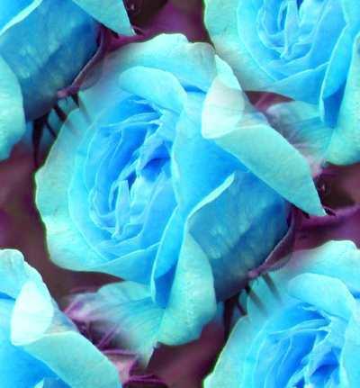 Colorful rosas