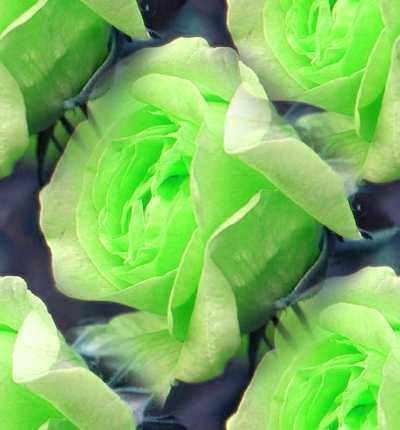 Green バラ