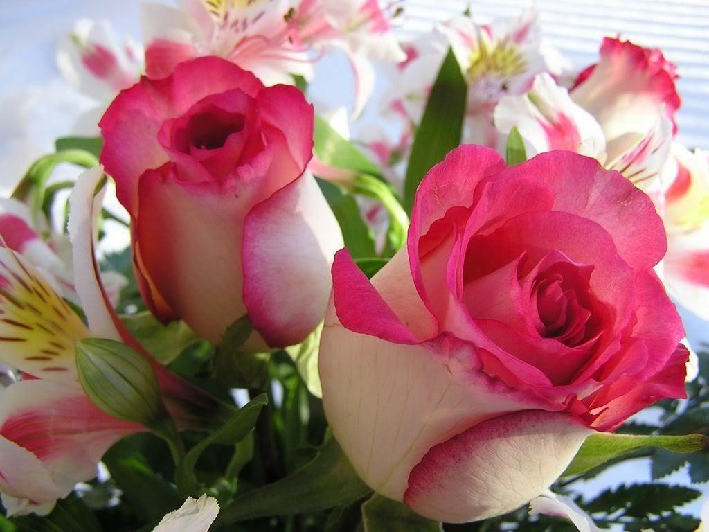 Beautiful Rose Flowers Desktop