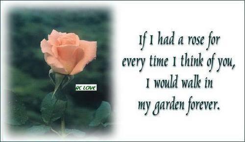 Rose Garden !