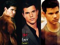 Taylor Lautner 2  - twilight-series photo
