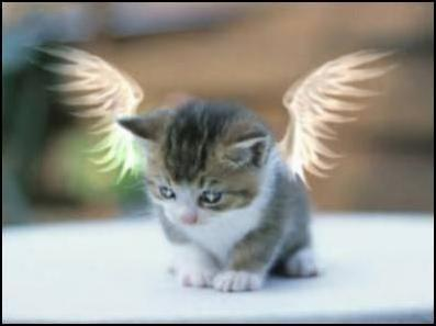 angel cat - cats Photo