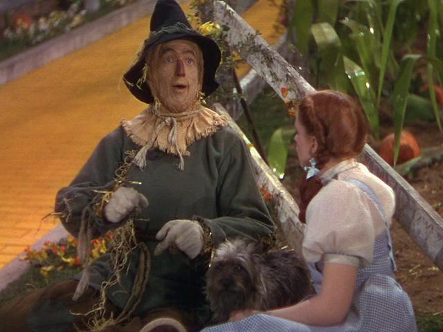 Toto The Wizard Of Oz Images Dorothythe Scarecrow And Of Course
