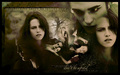 Edward and Bella - eclipse-movie wallpaper