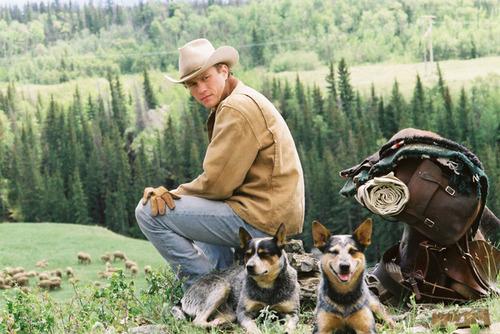 Movie Stills/Promos Brokeback Mountain [2005]