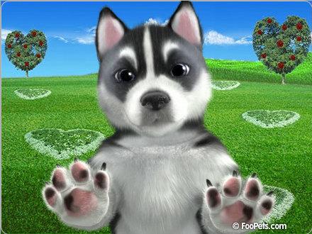My dog Lucky