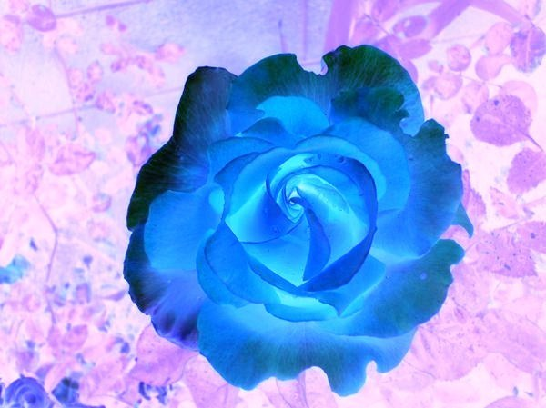 Neon Colors Rock Images Neon Roses Wallpaper And