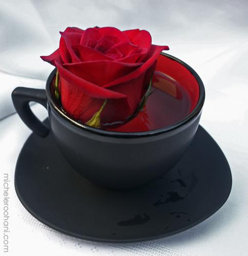 Red Rose !