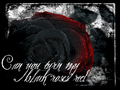 Red and Black Rose !