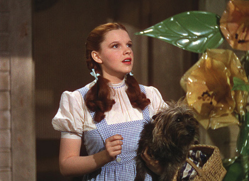 Toto (The Wizard of Oz) wallpaper entitled Toto and Dorothy