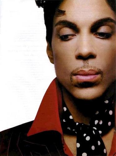 Prince wallpaper entitled prince