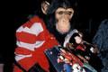 Bubbles misses MJ - michael-jackson photo