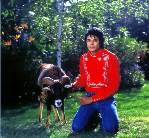 MJ with animais