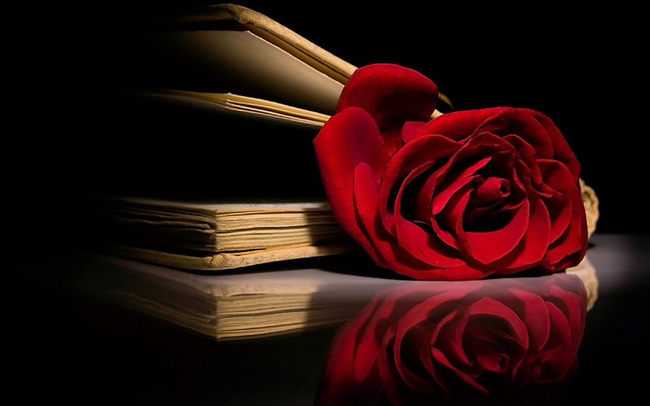 Roses Red  Red RoseRed Roses Wallpaper Desktop Background