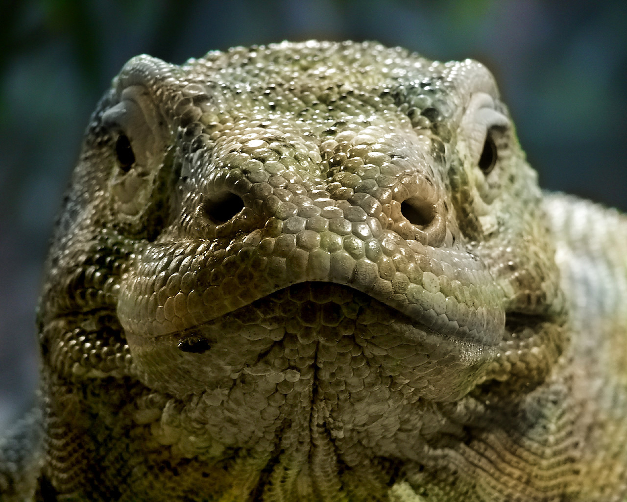 Reptiles Images Reptiles Hd Wallpaper And Background