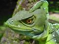 Reptiles...