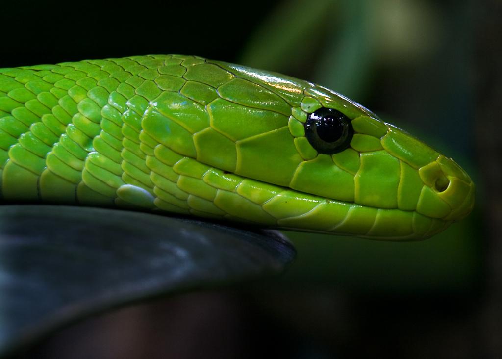 Reptiles-reptiles-11639966-1024-732.jpg