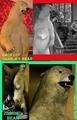 The Addams Family's bears