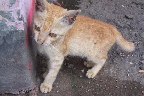 dirty kat