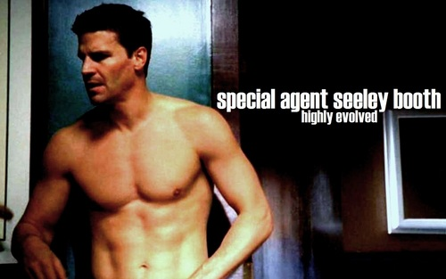 Seeley Booth wallpaper entitled Booth ~ Highly Evolved ♥