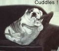 Cuddles ! - dogs photo