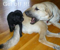 Get off !!! - dogs photo