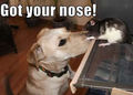 Got your nose ! - dogs photo
