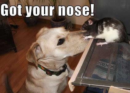 Got your nose !