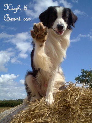 High 5 Berni xx