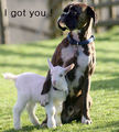 I Got you ! - dogs photo