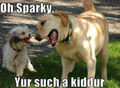 Joking :) - dogs photo