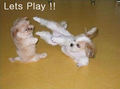Lets Play !! - dogs photo