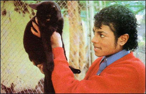 마이클 잭슨 바탕화면 titled MJ the rare album
