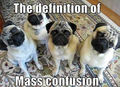 Mass Confusion ! - dogs photo