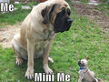 Me and Mini Me ! - dogs photo