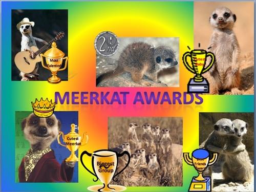 Meerkat Awards!