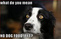 No Dog Food ?? - dogs photo