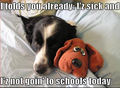 No School Today :) - dogs photo