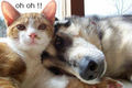 Oh Oh !! - dogs photo