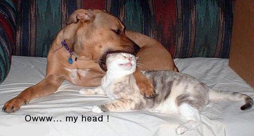 Owww....my head !!