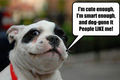 People like me ! - dogs photo