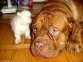 Psst..... - dogs photo