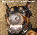Smile :) - dogs photo