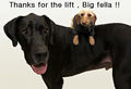 Thanks for the lift !! - dogs photo