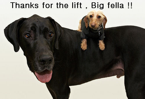 Thanks for the lift !!