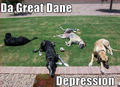 The Great Dane Depression !! - dogs photo