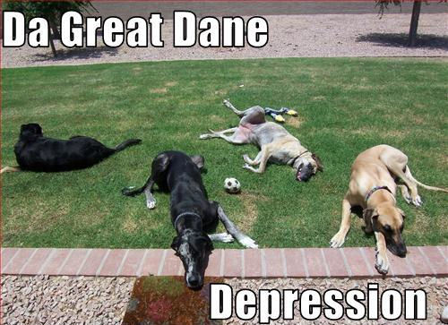 The Great Dane Depression !!