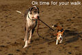 Walkies !! - dogs photo